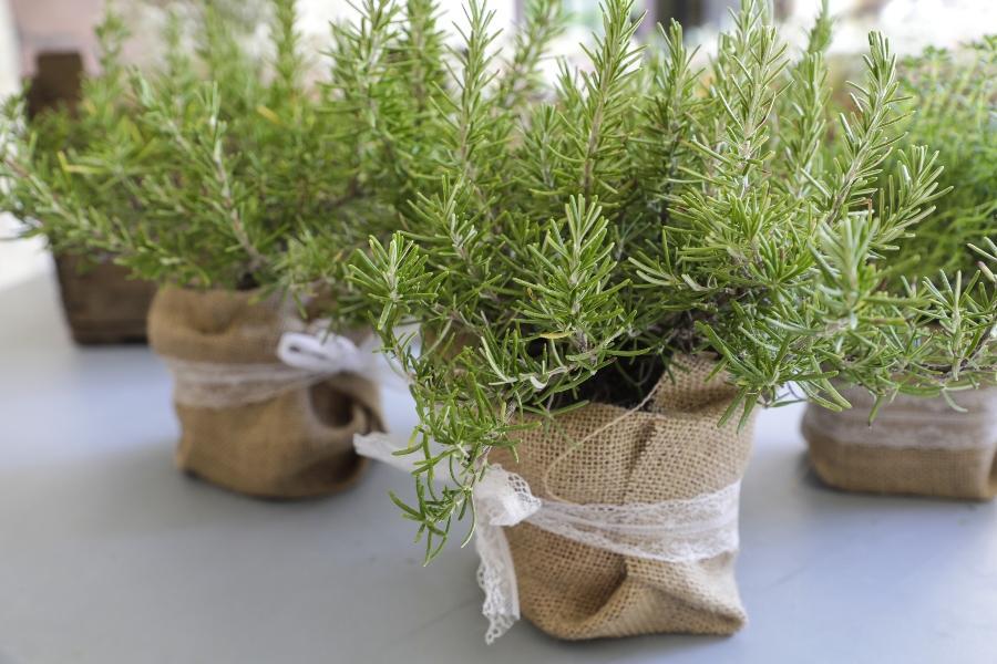 hochzeit-dekoration-topfpflanzen-hochzeitstrends-2020