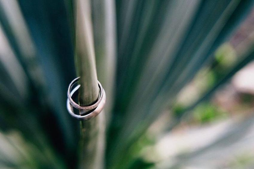Verlobungsringe an einer Pflanze