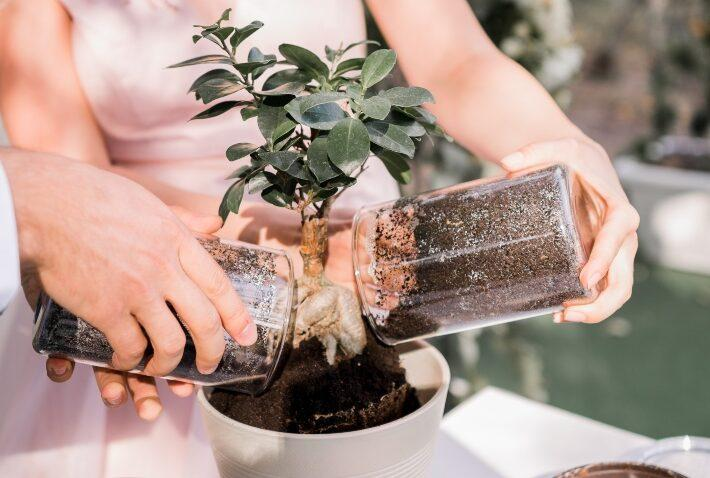 Hochzeitsbaum - ein Bonsai wird eingegraben