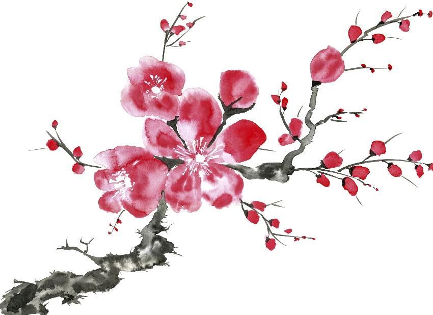 Gezeichneter Kirschzweig mit Blüten