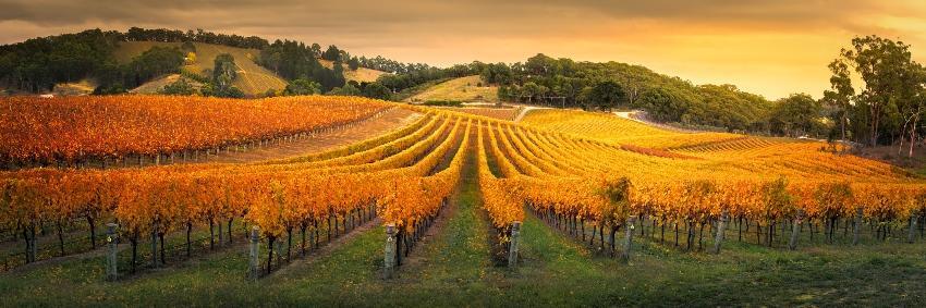 Ein Weingut im Herbst